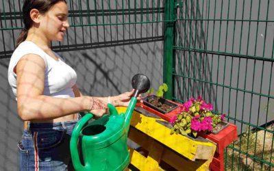 Bienenweiden für die FES