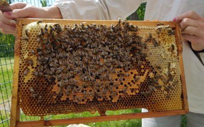 Die Bienen sind da !