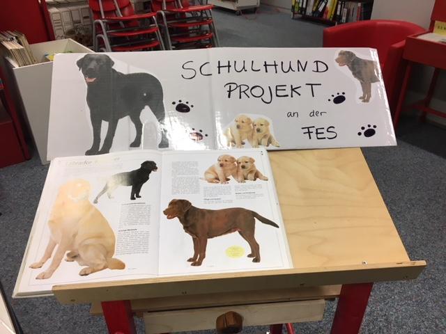 Schulhund-Projekt in der Bibi