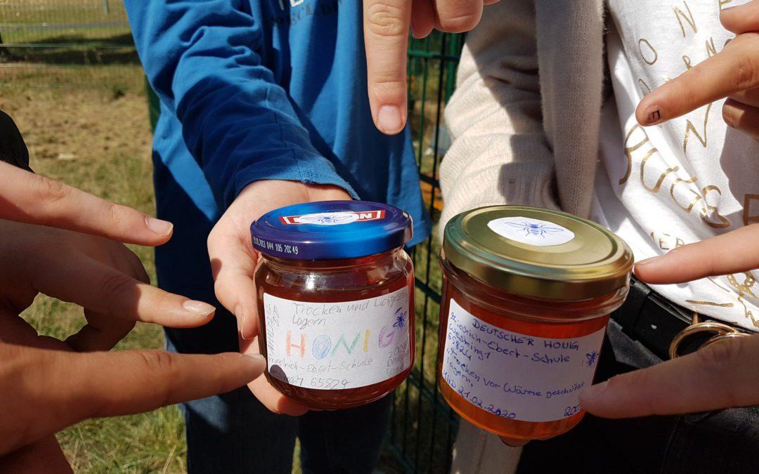 Die erste FES-Honigernte