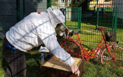 FES-Bienen im Erstfrühling