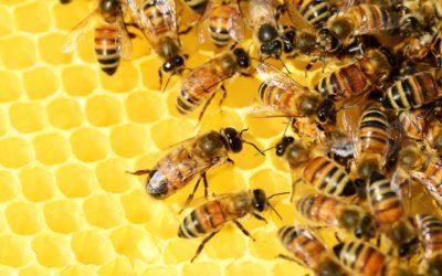 Eintauchen in die Welt der Bienen
