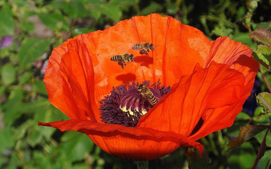 Der Frühsommer beginnt für die FES-Bienen