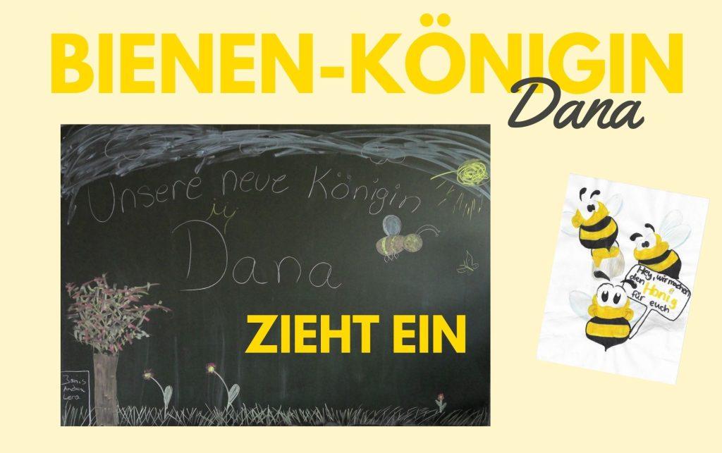 Bienen-Königin Dana zieht ein